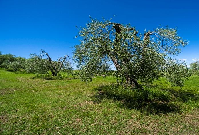 الإماراتيون يستثمرون في الفلاحة المغربية مليار درهم في غرس الأشجار المثمرة  وإنتاج الفواكه الحمراء