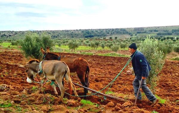 الجفاف بالمغرب : ظاهرة بنيوية قديمة، تحديات وتوجسات جديدة