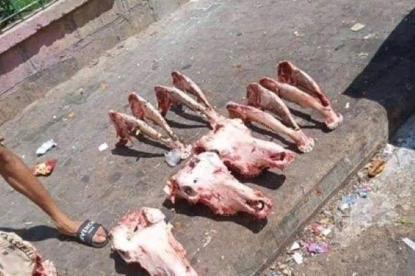 رؤوس الحمير مرة اخرى... بطون المغاربة تعيش صدمة جديدة